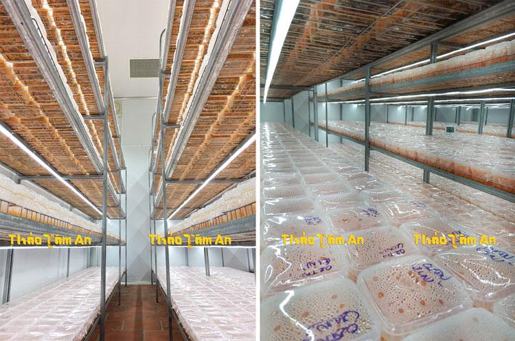 Phòng nuôi trồng Đông Trùng Hạ Thảo