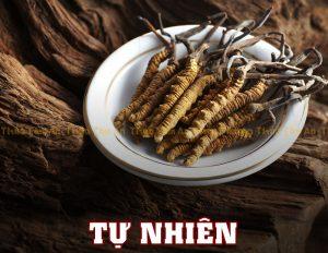 Đông Trùng Hạ Thảo Tây Tạng tự nhiên